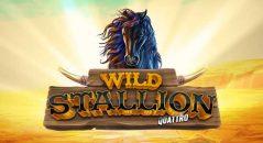 Wild Stallion Quattro
